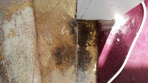 BLACK MOLD DOORWAY BETWEEN DINING AREAS